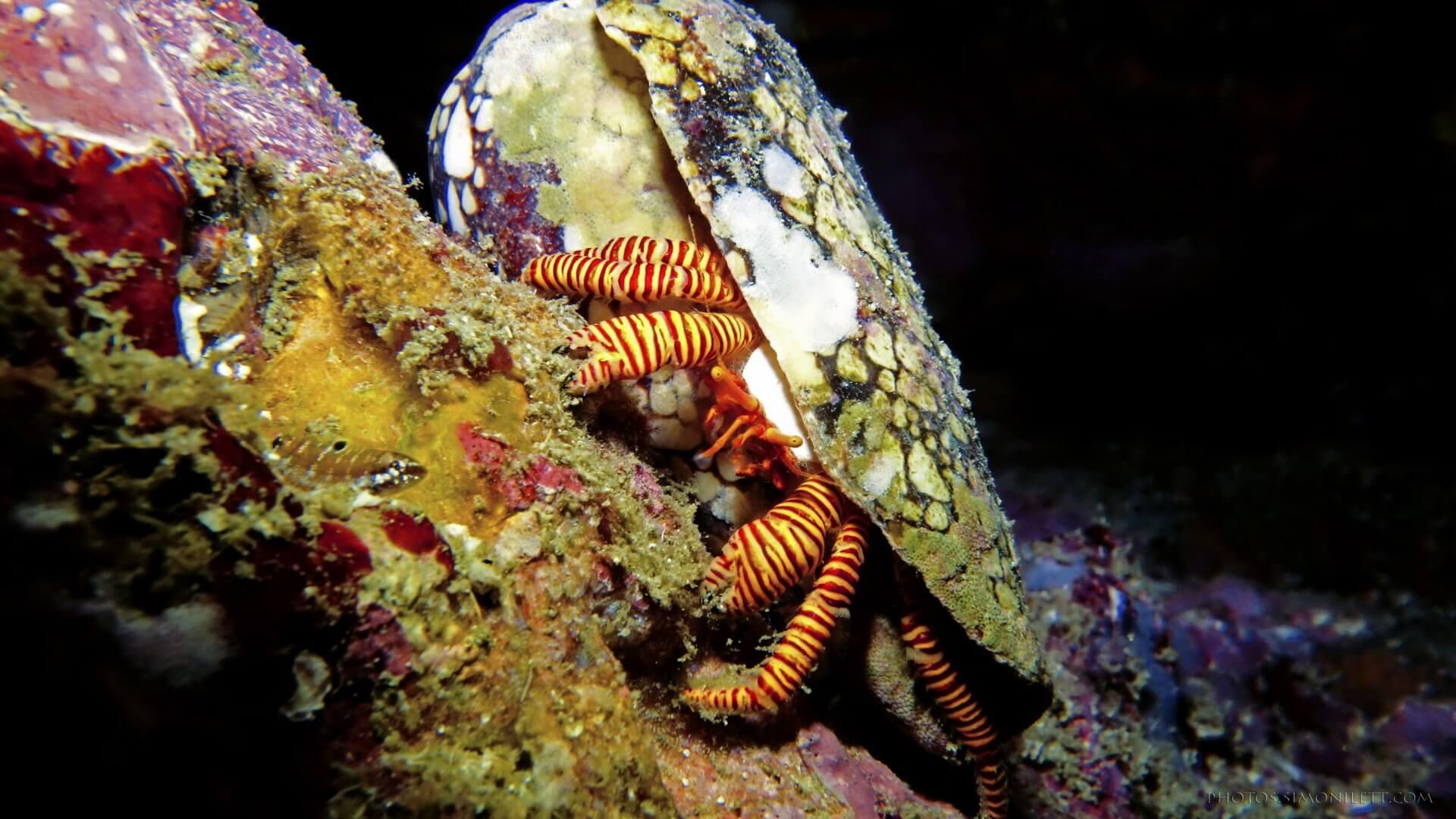 Spooky Halloween Hermit Crab