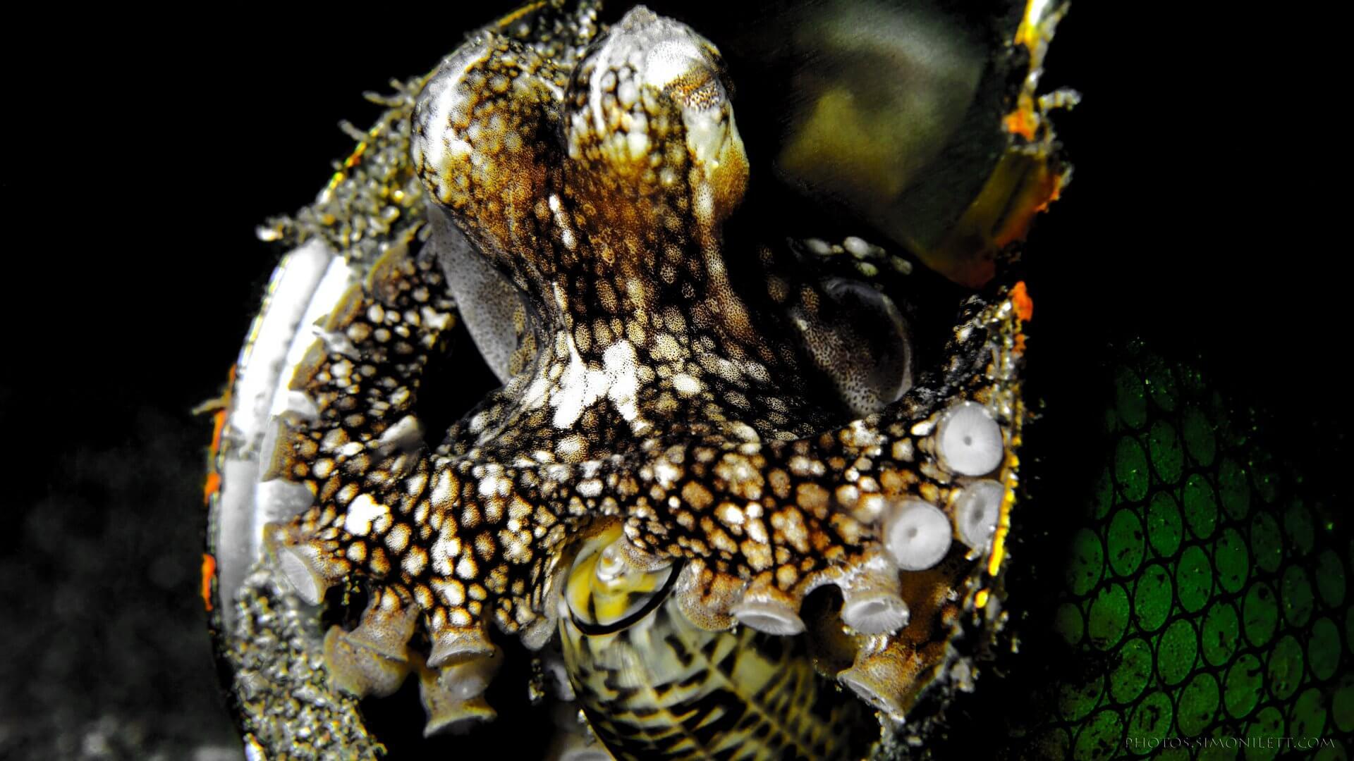Octopus In a Can, Holding a Snail Gun